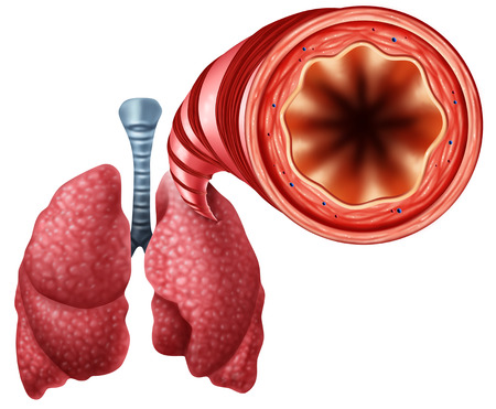 Healthy bronchial tube with human lungs close up anatomy as a medical symbol for open air breathing passage with 3D illustration elements.