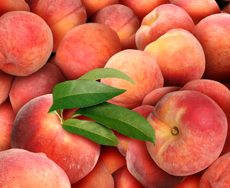 Peach background with a pile of fresh juicy ripe peaches as a summer fruit harvest.
