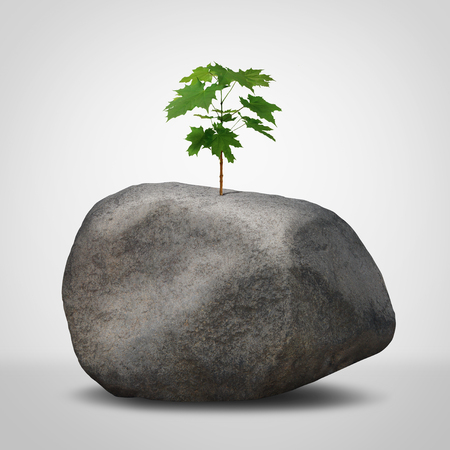 Challenge concept as a business struggle metaphor as a green plant sapling growing from an infertile rock in a 3D illustration style.