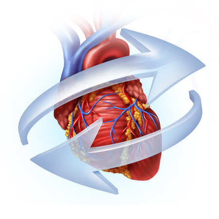Human heart function and cardiovascular circulation concept as blood circulatory and cardiac symbol and cardiology icon with 3D illustration elements Stock Photo