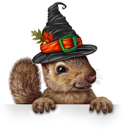 Halloween celebration squirrel blank sign concept as cute happy wildlife wearing a spooky witch hat holding a blank sign as a festive fall and autumn holiday seasonal and thanksgiving symbol with 3D elements.