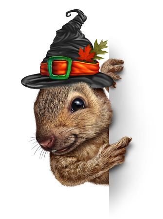 Halloween squirrel banner concept as cute happy wildlife wearing a spooky witch hat holding a blank sign as a festive fall and autumn holiday seasonal and thanksgiving symbol with 3D elements.
