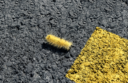 Danger and safety concept as a caterpillar crossing a dangerous highway towards pinted street lines as a road safety symbol. Stock Photo