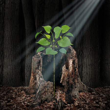 Believe and faith concept as a ray of light shining from above on a sapling growing out of a dead tree as a hope and spirituality idea in a 3D illustration style. Stock Photo