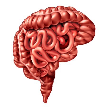 Gut brain axis concept as a digestive system and human thinking organ connected together as a medical biochemical signaling symbol as a 3D illustration isolated on white. Stock Photo