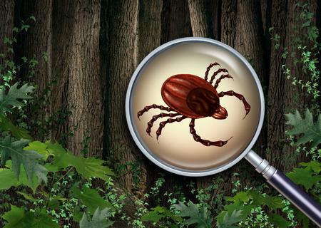 Avviso di foresta di zecche come primo piano di un insetto portatore di una malattia spaventosa come rischio per la malattia di Lyme in natura con elementi di illustrazione 3D. Archivio Fotografico