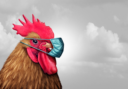 Biosecurity concept and quarantine biohazard danger as a chicken with a germ surgical mask as a health care infectious disease idea in a 3D illustration style. Foto de archivo