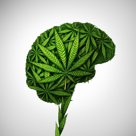 Cannabis brain and marijuana neurological effect on thinking as a human organ made of weed leaves as a pot or herbal medicine patient and effects on psychology or psychoactive THC drug concept in a 3D illustration style.