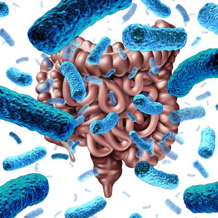 Bactéries intestinales en tant que bactérie probiotique à l'intérieur de l'intestin grêle et microflore digestive à l'intérieur du côlon ou de l'intestin en tant que symbole de santé pour le microbiome en tant que rendu 3D. Banque d'images