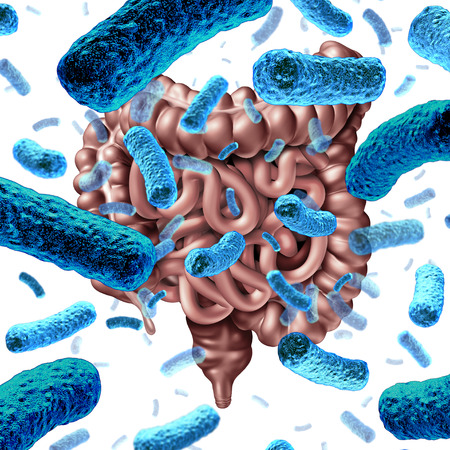 Gut bacteria as probiotic bacterium inside small intestine and digestive microflora inside the colon or bowel as a health symbol for microbiome as a 3D render.