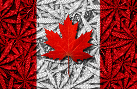 Canadian cannabis concept and Canada marijuana law and legislation social issue as medical and recreational weed usage icon as a red maple leaf on a background of pot leaves in a 3D illustration style.