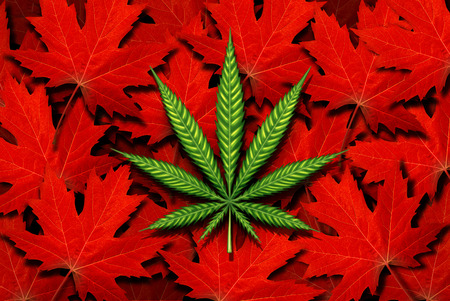 Canada cannabis and canadian marijuana concept and law and legislation social issue as medical and recreational weed usage icon as a green pot symbol on a background of red maple leaves in a 3D illustration style.