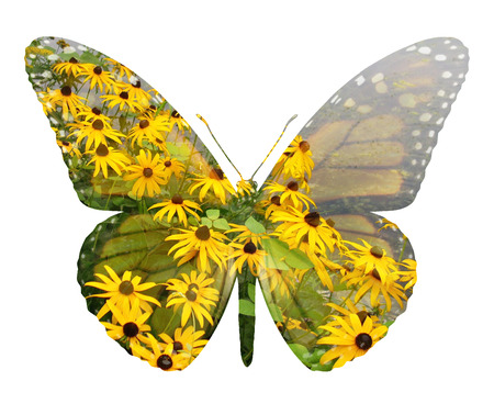 Ecology symbol and environmental conservation icon as a field of flowers and lake shaped as a butterfly representing happiness and habitat protection with 3D illustration elements.