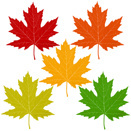 Autumn leaves with a red maple leaf including orange yellow green symbols as a seasonal themed concept as an icon of fall weather on an isolated white background in a graphic 3D illustration style.
