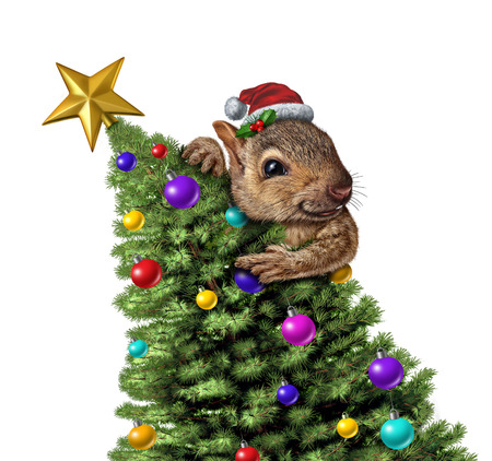 Funny squirrel decorating a Christmas tree as a winter holiday greeting icon on a white background with 3D illustration elements isolated on a white background.