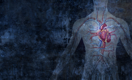 Human circulatory system and cardiology  arterial and venous body function abstract background as a human heart function symbol in a 3D illustration style.