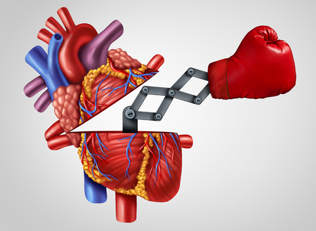 Human Heart strength as an open cardiovascular organ with a punch as a medical symbol for fighting cardiology related disease with 3D illustration elements.