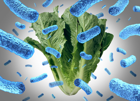 Romaine lettuce e coli outbreak food poisoning as a vegetable contamination or bacteria public health risk in a salad with 3D illustration elements.