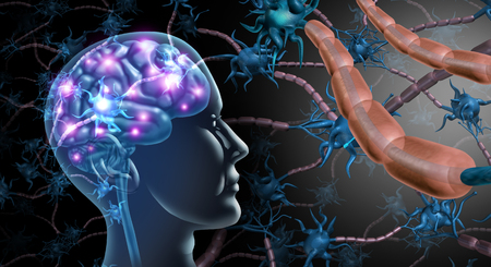 Brain nerve cells and nervous system anatomy concept as a human neurology and neuron function disorder symbol for multiple sclerosis or alzheimer disease with 3D illustration elements..
