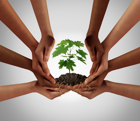 Social community cooperation concept and group crowdfunding investment symbol as a team of diverse hands nurturing a sapling tree with roots wrapped and connecting the people together i a 3D illustration style. Stock Photo
