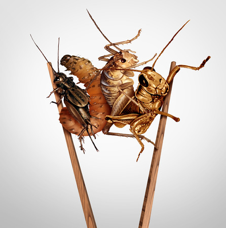 Edible insects and eat bugs or eating insect snacks as exotic cuisine and alternative high protein nutrition as a cricket grasshopper and larvae with chopsticks as a symbol for entomophagy with 3D ill