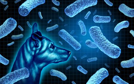 Infección bacteriana contagiosa de brucelosis canina de perros con el peligro de la enfermedad de las bacterias del perro que infecta a los humanos como un riesgo para la salud pública con ilustración 3D. Foto de archivo