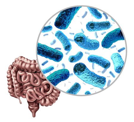 Bacteria in the intestine as gut probiotic bacterium inside small intestine and digestive microflora inside the colon or bowel as a health symbol for microbiome as a 3D render isolated on a white background.
