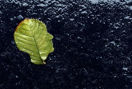 Concept of depression as a depressed mood concept as a rainy day leaf shaped as a head as a mental health problem as a composite image.