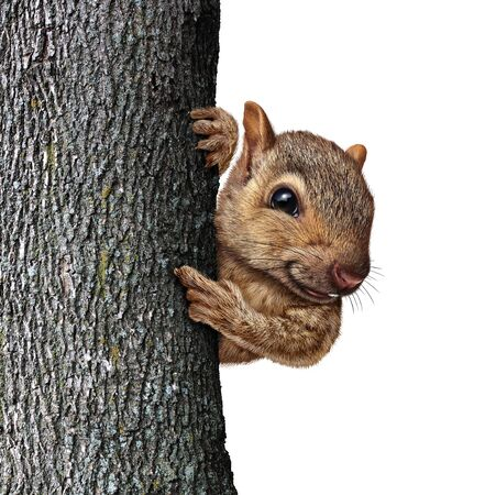 Squirrel behind a tree holding bark with realistic fur and paws as a friendly cute furry rodent character as an important and special message pertaining to wild animals and forest wildlife in a 3D ill