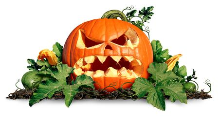 Halloween pumpkin jack o lantern with pumkins and leaves on a white background as a concept  and symbol for a creepy advertisement and marketing announcement for a harvest with 3D illustration elements.