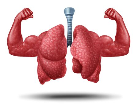 Strong healthy human lungs and powerful cardiovascular with muscle biceps in a 3D illustration style. Stock Photo