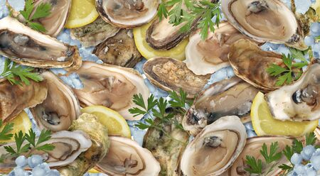 Oysters seafood background as a fresh delicacy of raw shucked shellfish with lemons and ice.