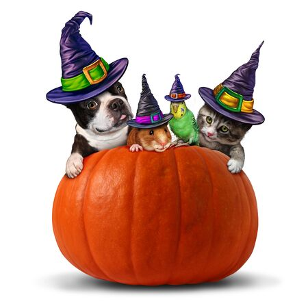 Pet halloween symbol as a group of pets as a dog cat bird and hamster dressed in holiday costumes sitting on a pumpkin with 3D illustration elements.