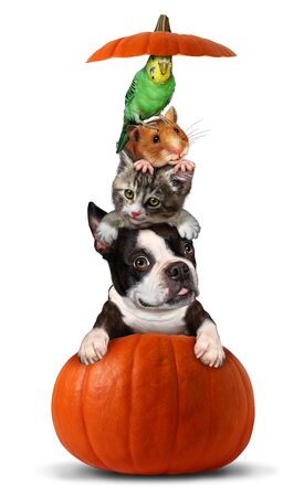 Halloween pets in a pumpkin as a vertical group of pets as a dog cat bird and hamster sitting on an orange gourd with 3D illustration elements. Stock fotó