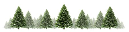 Pine tree horizontal winter border design with a group of green Christmas trees on a white background as a festive evergreen forest element for the holiday season including New Year as a 3D illustration..