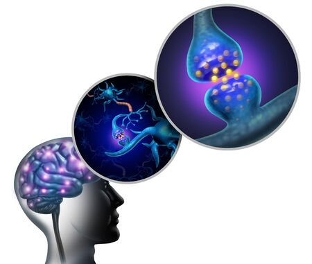 Neurology anatomy and nerve cells inside the brain and nervous system concept as a neuron function symbol for multiple sclerosis or alzheimer disease or mental health icon with 3D illustration elements.