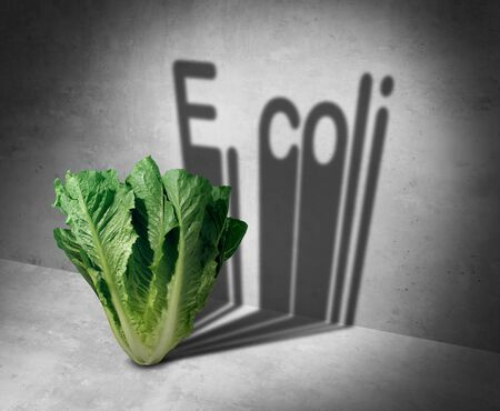 E coli contaminated romaine lettuce and vegetable bacteria danger as a health risk of eating raw food as a public safety concept with 3D illustration style. Stockfoto - 134343104