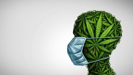 Marijuana medicine concept and cannabis medication as a human face made of weed leaves wearing a surgical mask as a symbol for medicinal treatment of disease in a 3D illustration style. Stock Photo