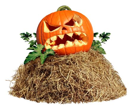 Halloween Hay pile with a carved pumpkin isolated on a white background as an agriculture farm and farming symbol of harvest time with dried grass straw as a mountain of dried grass haystack. Stock Photo