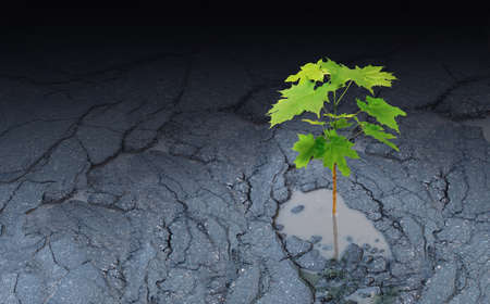 Against all odds metaphor and persistence to survive symbol as a sapling growing out of an asphalt pot hole.