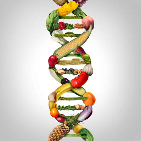 GMO food and Genetically modified crops or engineered agriculture concept using biotechnology and genetic manipulation through biology science as fruit and vegetables as a DNA strand symbol with 3D illustration elements.