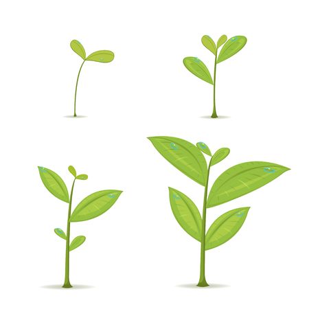 Plant Green Leaf Grow Set Vector Illustration