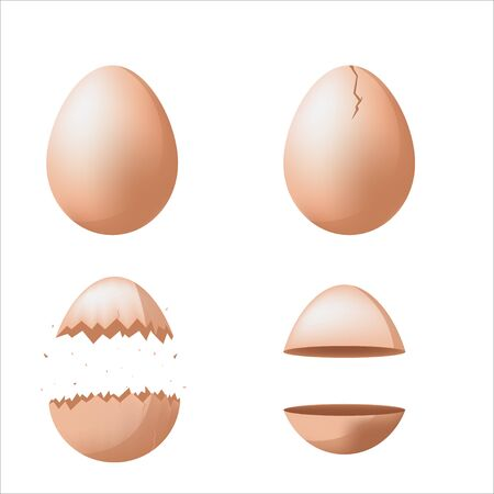 Egg Separate Broken Different Set Vector