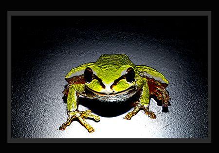 metallic frog