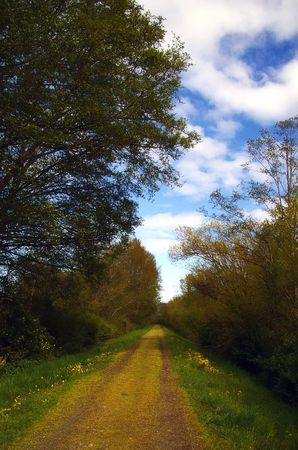 an old country road through the trees