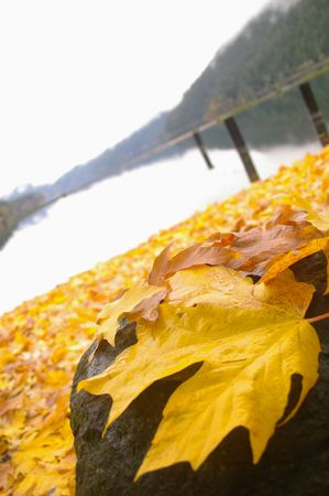 Leaves by the lake. Stock Photo