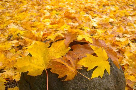 Autumn Ground Cover Stock Photo