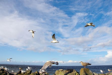 Flock of Sea Gulls