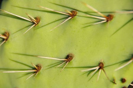 The thorns of a cactus plant. Stock Photo