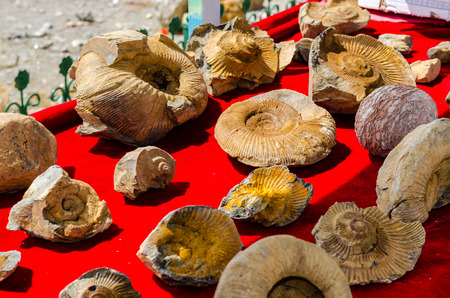 mathematically: Fossilized seashells on a red background